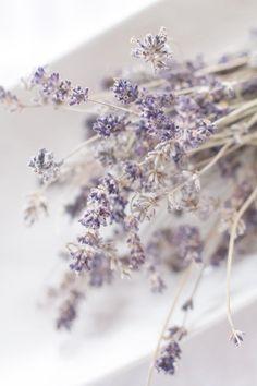 I like the idea of just a tiny bit of lavender thrown in Lavender Cottage, Lavender Garden, Lavender Fields, Lavender Color, Lilac, La Provence France, Floral Bouquets, Shades Of Purple, Ultra Violet