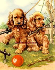 Cocker Spaniel Puppies Puppy Roddie Rory Dog Old Print COCKER SPANIELS RODDIE & RORY ARTIST: WINIFRED MARTIN