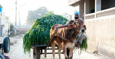 My Punjab.Apna punjab A sikh farmer in Punjab. Pictures With Deep Meaning, Young Farmers, Indian Curry, Amritsar, Incredible India, Character Inspiration, Desi, Two By Two, Spirit