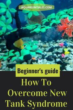 Aquarium Ideas, Aquarium Design, Aquarium Fish Tank, Planted Aquarium, Fish Information, Nitrogen Cycle, Tropical Fish Tanks, Saltwater Tank, New Tank