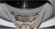 Si cada vez que abres tu lavadora sientes un olor desagradable a pesar de que acabas de dejar tu ropa impecable, tal vez es hora de revisar que la goma que bordea la entrada no esté invadida por el moho y las bacterias. La acumulación agua, residuos y jabón es un caldo de cultivo para …