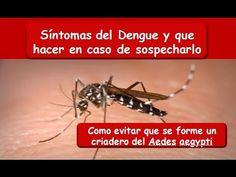 DENGUE: Síntomas y prevención del Dengue Dengue, Diets, Health