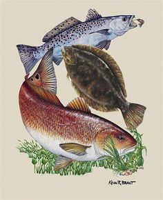 Freshwater fishing can be a great experience. Find out more about freshwater fishing including useful tips and how to stay safe when you are on the water. Trout Fishing, Bass Fishing, Fishing Poles, Underwater Fish, Cool Fish, Scenery Pictures, Red Fish, Fish Art, Freshwater Fish
