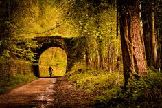 Chip Davies Photography Mountain biking in the Royal Forest of Dean, Gloucestershire, England