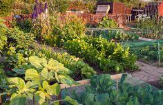7 motivos para transformar tu patio, jardín o terraza en un huerto urbano