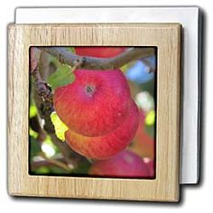 A close up of some red apples hanging in a tree in Pine Valley UT Tile Napkin Holder