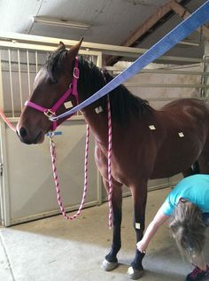 learning the parts of a horse-equine assisted psychotherapy