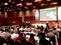 Pre-CITES meeting good for pangolins, rays, lions; bad for polar bears | IFAW - International Fund for Animal Welfare