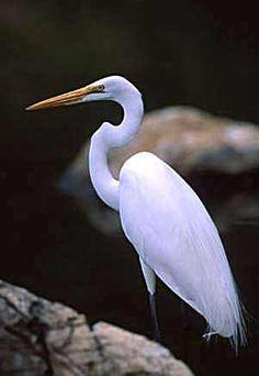 Egrets - Coins Image