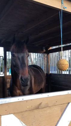 Horseback Riding, Mammals, Pony, Horses, Entertaining, Pony Horse, Ponies, Equestrian, Horse