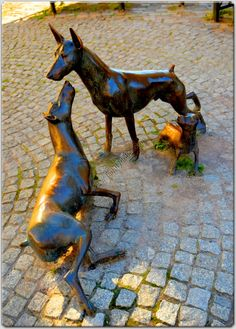 Apolda, Germany. Birthplace of the breed. Early Dobermans must have looked like this!