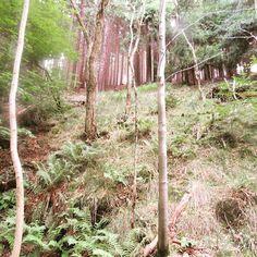 #arcadeplace #forests  #naturelovers #natures #like4like #jachymov