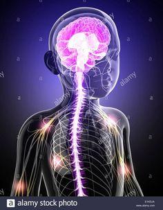 Nerf Vague, Cranial Nerves, The Nerve, Spinal Cord Stimulator, Autonomic Nervous System, Effects Of Stress, Chronic Stress, The Emotions