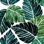 Monstera Leaves by crystal_walen