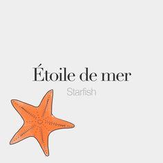 Étoile de mer (feminine word) | Starfish | /e.twal də mɛʁ/ Drawing: @beaubonjoli.