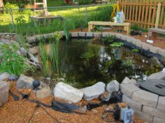 red ear slider outdoor habitat