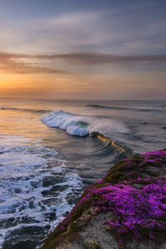 The mystique of the ocean shore~