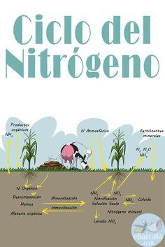 El ciclo del #nitrógeno. Las vacas contribuyen mucho. Dale un toque de humor a tus #infografías. Riguroso no es sinónimo de aburrido!!