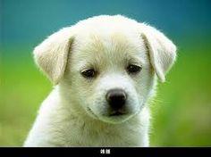 tatlı hayvan resimleri ile ilgili görsel sonucu