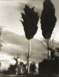 Egon Egone (1890-1958) Tuscan Cypresses, 1926, vintage, stampa ai sali d'argento, cm 34x25. Courtesy: Fabio Castelli