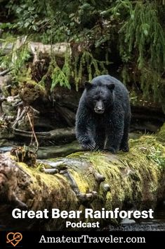 Travel to the Great Bear Rainforest, British Columbia (Podcast) #travel #british-columbia #canada #wildlife #boat #cruise Travel Plan, Travel Tips, Travel Destinations, Cheap Places To Travel, Places To Visit, Cruise Travel, Best Cities, Canada Travel, Dream Vacations