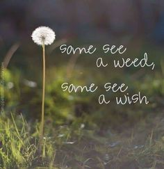 Some see a wish, Others see only a weed.