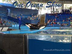 One Ocean Shamu ShowThis conference was different than any other I had been to before. I love how Sea World thought of my whole family to be involved in the conference. While I was learning my family was able to do fun crafts and they also met a few animals up close.
