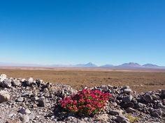 Atacama woestijn Tours, Dessert, Mountains, Nature, Travel, Saints, Naturaleza, Viajes, Deserts