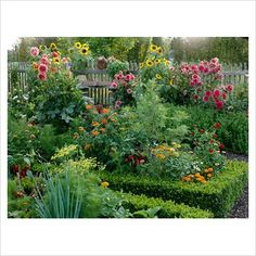 flowerbeds with zinnias and sunflowers | Library - Summer potager with Buxus - Box edging. Dahlia, Zinnia ...