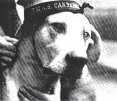Famous Dogs in History: Just Nuisance: Simon's Town Mascot Great Dane Names, Military Honors, Famous Dogs, Loyal Dogs, War Dogs, Cartoon Dog, Royal Navy, Service Dogs, Mammals