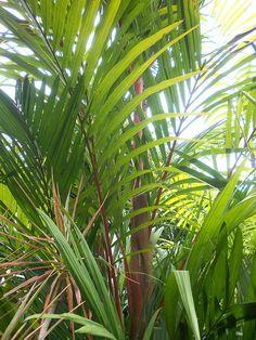 Landscape Design New Zealand Landscaping Ideas NZ. Coral Roses, Jar Design, Gold Spray Paint, Home Landscaping, Painted Mason Jars, Baby Shower Centerpieces, Landscape Design, Plant Leaves, Home And Garden