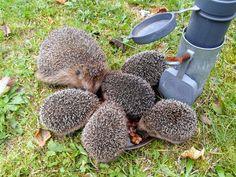 Edible Garden, Dog Food Recipes, Green Day, Gardening, Fruit, Pets, Nature, Flowers, Hedgehogs