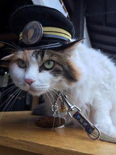 Faites connaissance avec Nimita, l'adorable nouveau chef de gare japonais !
