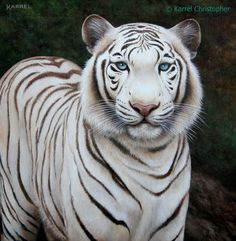 "Black & White Tiger ~ original painting by © Karrel Christopher ~ oil on canvas, mounted on board  / framed ~ 12"" x 12"" ~ available for purchase ~ http://www.karrelchristopher.com/animal-portraits.html  ~ Big Cats ~ Wildlife Art ~ Animal Portraits ~ Totem Animals"