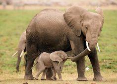 Stop!!! matar a criaturas maravillosas. PELIGRO DE EXTINCIÓN !!!!!