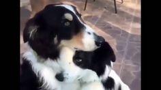Kom maar jongen, ik troost je wel #cute #dogvideo,