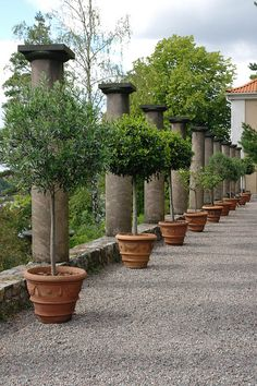 set in big wood boxes in their pots? Tuscan Garden, Italian Garden, Gravel Garden, Garden Landscaping, Fruit Garden, Garden Pots, Small Gardens, Outdoor Gardens, Garden Planning