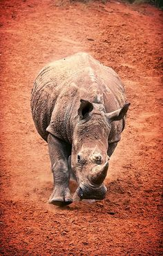 Unicorns are real. They're just fat, grey, and we call them rhinos.