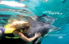 Discovery Cove ad