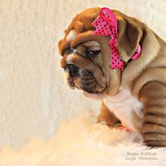 (5) Baggy Bulldogs - Baggy Bulldogs added a new photo.