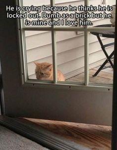Stupid cat,