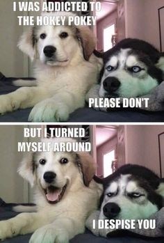 Funny Husky Meme Funny Husky Quote The post ap - Funny Dog Quotes - Funny Husky Meme Funny Husky Quote The post appeared first on Gag Dad. The post Funny Husky Meme Funny Husky Quote The post ap appeared first on Gag Dad. Funny Husky Meme, Funny Dog Jokes, Cute Funny Dogs, Cute Funny Animals, Stupid Funny Memes, Funny Relatable Memes, Haha Funny, Funny Humor, Funny Sarcasm