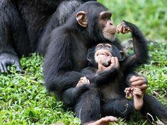 Chimpanzee Sanctuaries in Delhi, India @ Sanctuariesindia.com