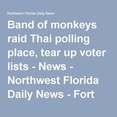Band of monkeys raid Thai polling place, tear up voter lists - News - Northwest Florida Daily News - Fort Walton Beach, FL