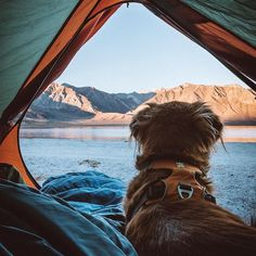 Would you camp here? @canevariphoto #campingwithdogs