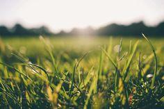Nada como um lindo gramado para nos fazer sentir mais próximos à Natureza. Ela dá um ótimo acabamento ao jardim, atribuindo uma atmosfera de limpeza e organização à área externa. Ela ajuda a realçar espécies de árvores, arbustos e flores...