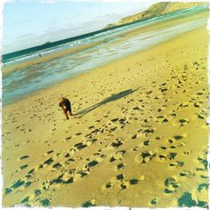 Giving the hound a run along the beach at Sennen, West Cornwall. One of our favourite places on earth. West Cornwall, Devon And Cornwall, The Beautiful South, Earth, Places, Water, Outdoor, Gripe Water, Outdoors