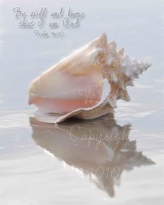http://media01.bigblackbag.net/17305/portfolio_media/lwlm_be-still-seashell-_160.jpg