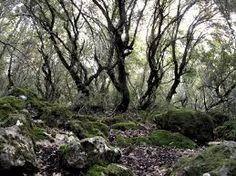 תוצאת תמונה עבור צילומי עצים