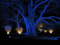 Preparing awesome exterior lighting and Christmas decors will surely give entertainment to one's home and brightens the neighborhood. Star Lights On Ceiling, Diy Yard Decor, Enchanted Wood, Spooky Trees, Im Blue, Lighting Logo, Woodland Decor, Magical Forest, Tree Photography